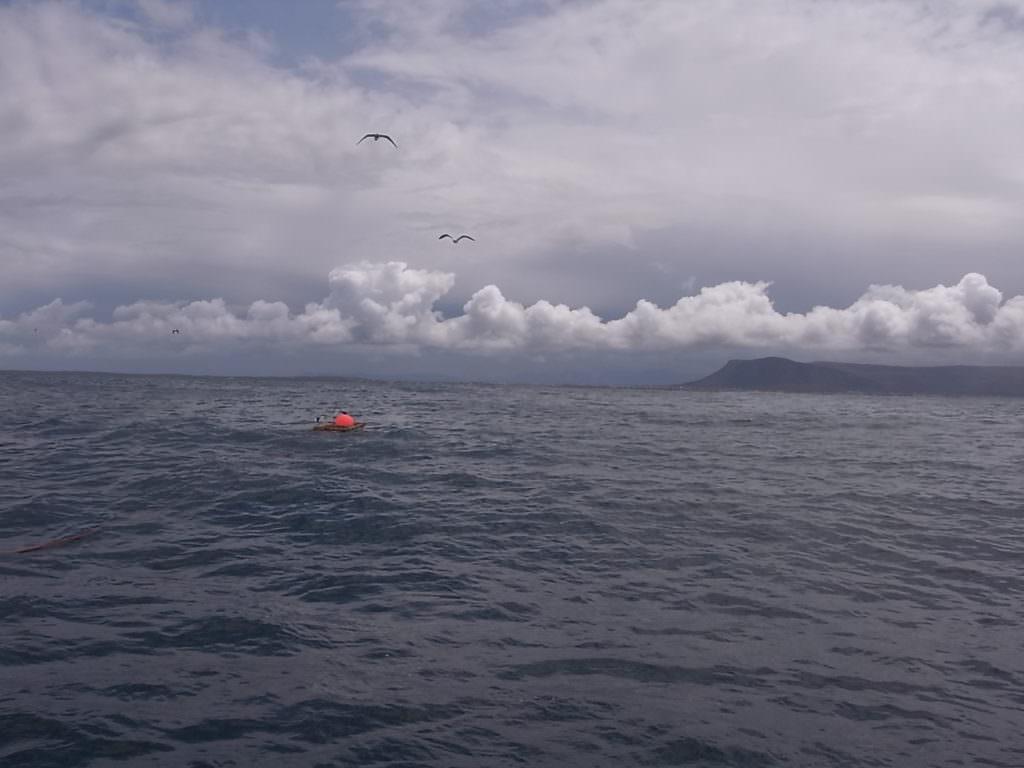 Акулы в заливе Гансбаай