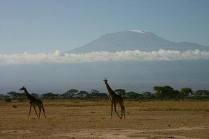 Удивительный отдых в парках Кении