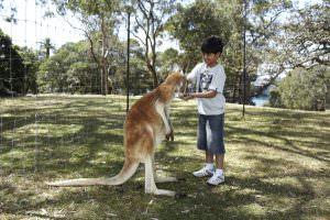 Отдых и туризм в Австралии: что и как