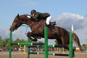 Отдых и конный спорт совместимы