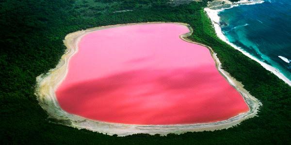 Розовое озеро Хиллиер